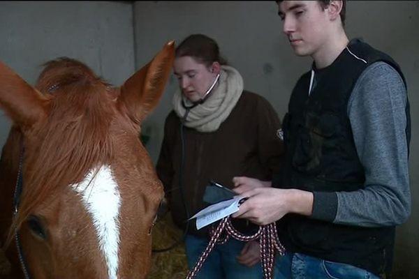 Exercice au contact des chevaux avant le Salon de l'agriculture au lycée de Kernilien
