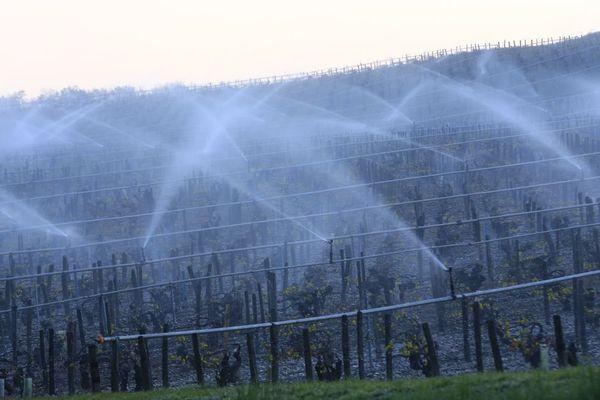 Pour protéger leurs vignes des assauts du gel, les vignerons ont recours à l'aspersion d'eau
