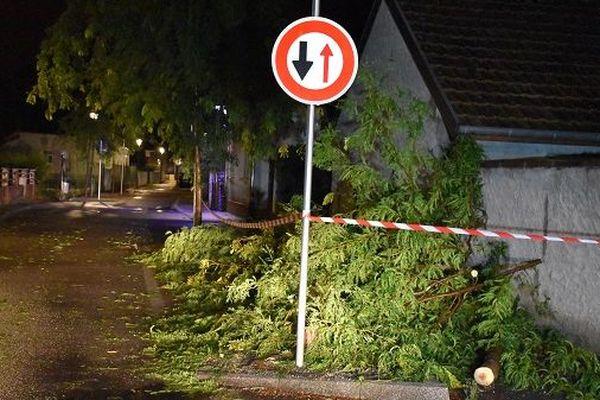Des arbres couchés sur la chaussée dans le Haut-Rhin