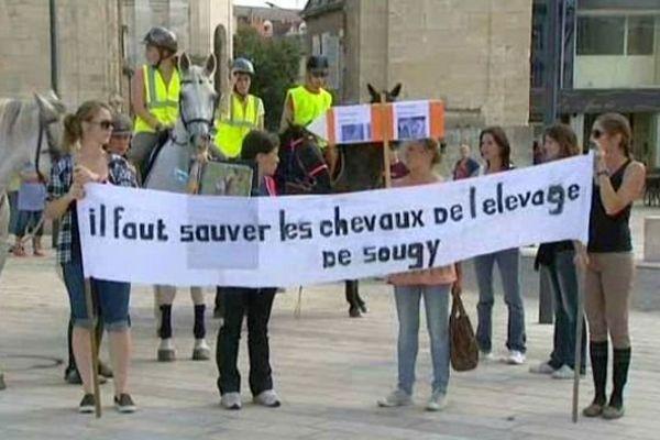 Des associations des amis des animaux dénoncent des cas de maltraitance sur les chevaux d'un domaine privé, à Sougy-sur-Loire, à une trentaine de kilomètres de Nevers.