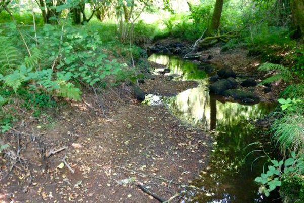 Le ruisseau des Râches, à côté de Saint-Priest-sous-Aixe (Haute Vienne), victime de la sécheresse