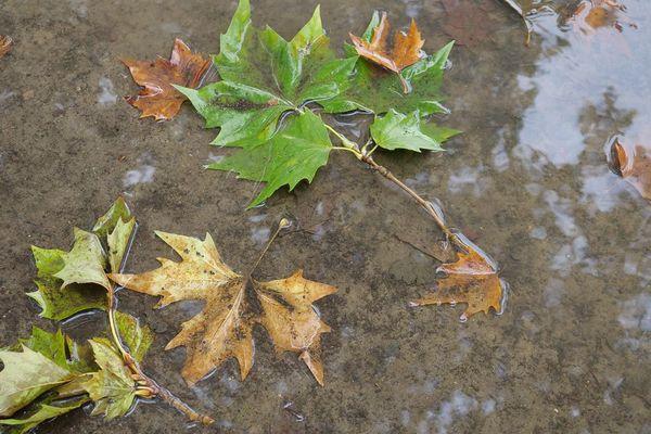 Une semaine grise et pluvieuse selon Météo France