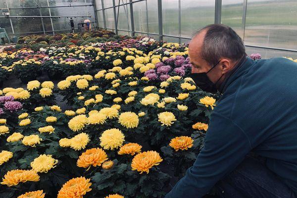 Xavier Duval présente plusieurs espèces de chrysanthèmes dans sa première serre.