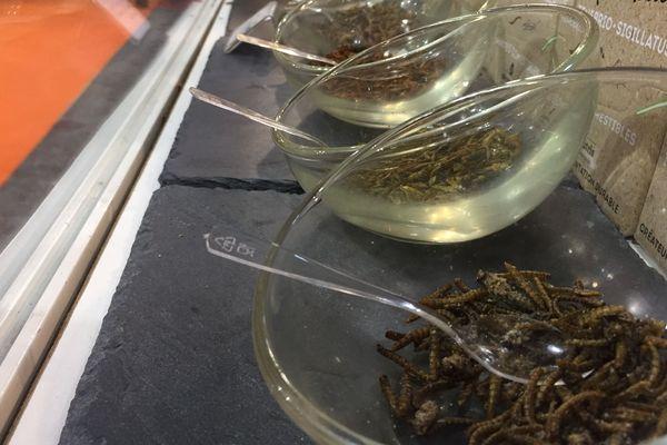 Dans le sud de la France, dans une ferme intérieure à Saint-Orens de Gameville, pas loin de Toulouse, Cédric élève depuis 2011 des insectes destinés à la consommation - février 2018