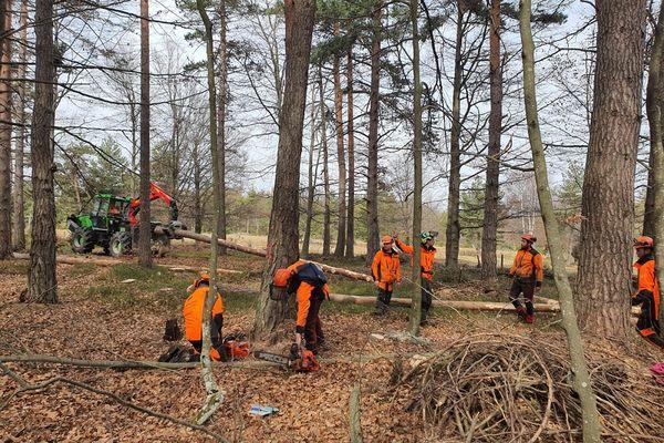 Le secteur forestier peine à recruter dans la région et notamment en Haute-Loire.