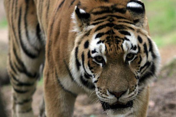 Né à Hambourg, en Allemagne, Yurij est arrivé au zoo de Mulhouse en 2004
