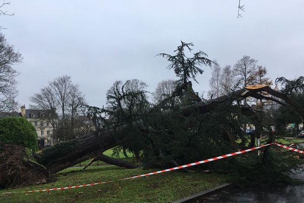 Caen: un cèdre centenaire déraciné dans le jardin du rectorat