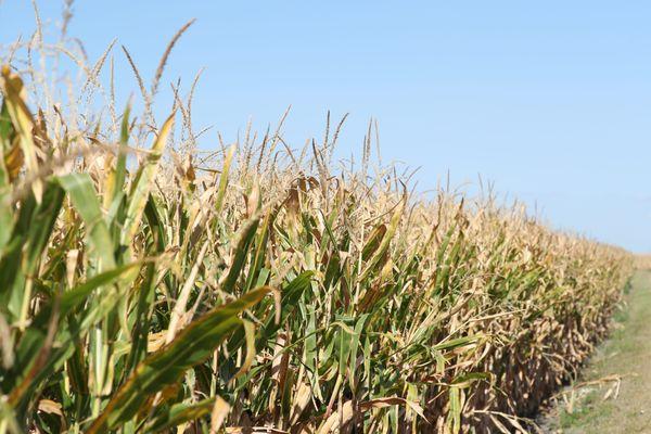 La Bourgogne-Franche-Comté particulièrement touchée par la sécheresse cet été 2020.