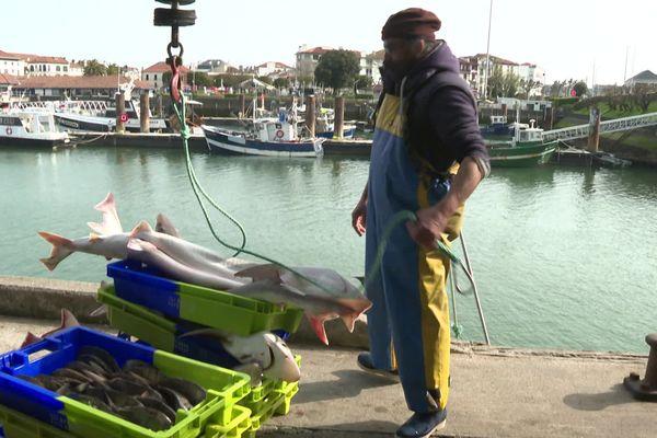 Débarquement du poisson sur les quais du port de Saint-Jean-de-Luz au Pays basque. La criée a repris son activité en version numérique.