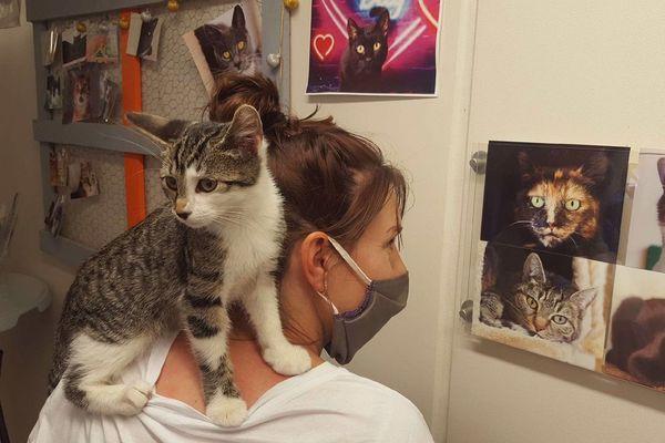 La SPA de Rennes fait face un très fort afflux de chatons et d'animaux abandonnés cet été.
