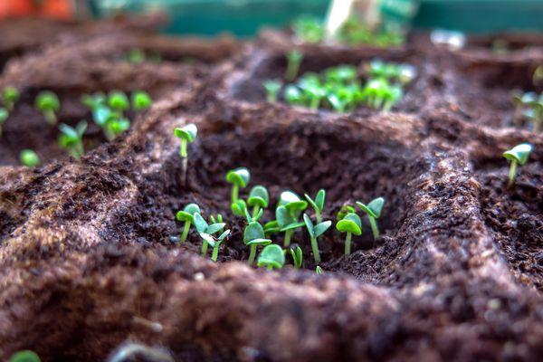 Dans le Haut-Jura, les grainothèques permettent aux particuliers de trouver des graines pour faire eux-même leurs semis