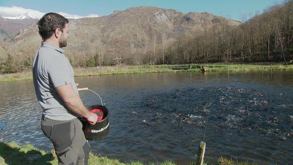 Morgan Catala pisciculteur nourrit ses truites dans sa ferme aux chutes d'Aston en Ariège