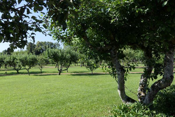 """Les jardins du château de Talmay (21) sont labellisés """"Jardin Remarquable"""" depuis 2004 grâce au verger."""