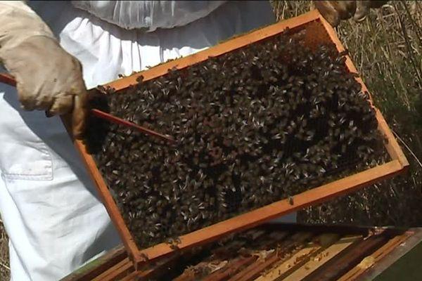 """Provence : opération """"parrainez des ruches"""""""