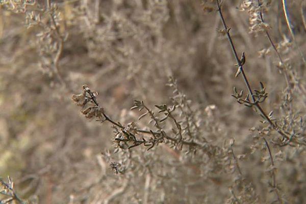 La végétation souffre de la sécheresse.
