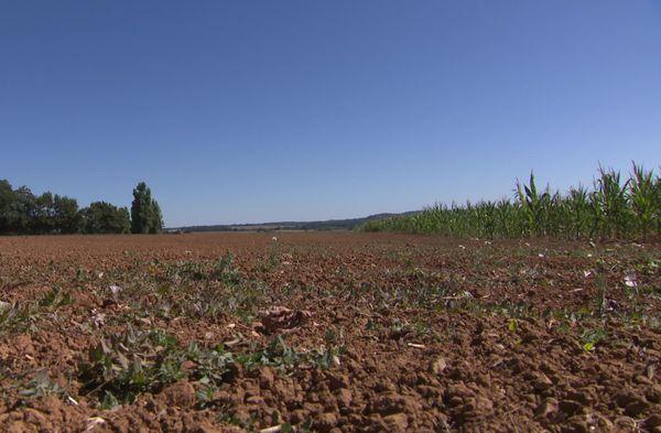 Dans le Perche les terres agricoles subissent la sécheresse depuis 4 mois