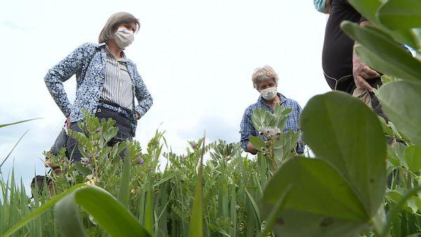 Les éleveurs qui fournissent des efforts pour une agriculture plus respectueuse de l'environnement ne veulent pas être oubliés des aides gouvernementales et en appellent à la député LREM Jacqueline Dubois