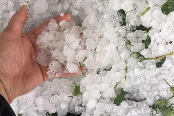 Drôme : les avocats au secours des agriculteurs sinistrés par l'orage de grêle du mois de juin