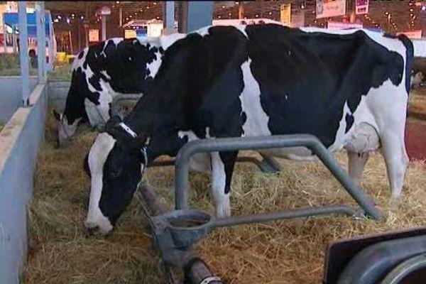 Indra est une vache laitière de 2,5 ans de race Prim'Holstein. Son éleveur Sébastien Bonamy (Loiret) la présente au Concours de lactation - Salon International de l'Agriculture. Févr 2016