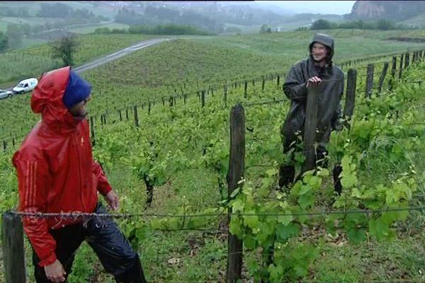 """Ce vignoble a pu être exploité grâce à l'association """"Terre de liens"""""""