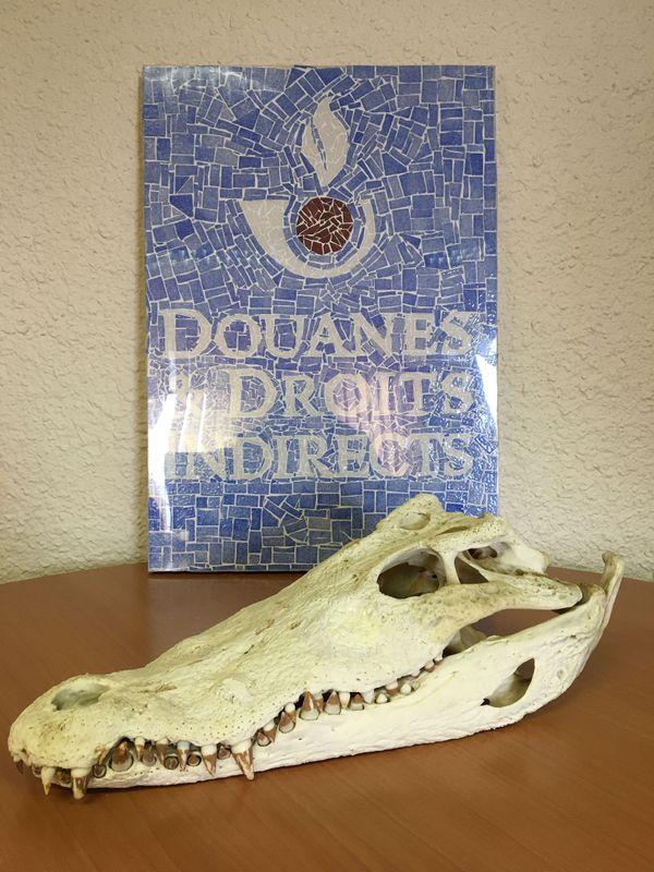 Le crâne de crocodile du Siam sera sans doute confié à un musée.