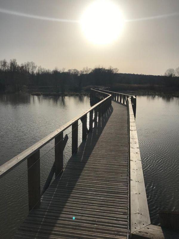Depuis l'été dernier, un grand ponton en bois permet de marcher au-dessus sur l'étang de La Capelle-et-Masmolène, dans le Gard et d'approcher les oiseaux.