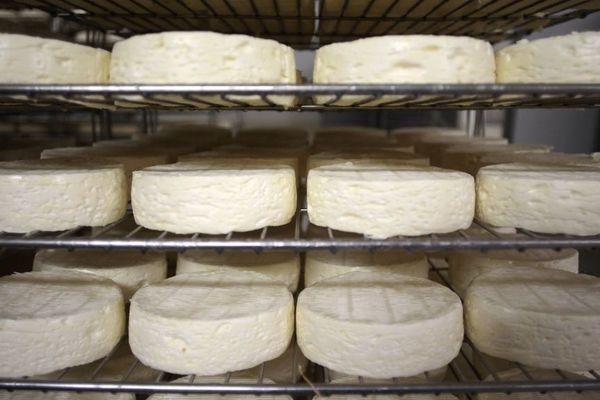 La Société fromagère de la Brie tourne à l'arrêt après avoir été mise en cause dans un cas de Listeria début avril.