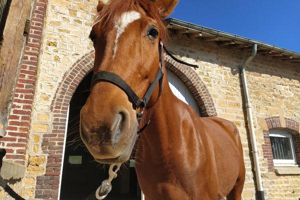 La relation entre les chevaux et les mineurs délinquants permet de développer l'empathie et l'humilité chez les jeunes.