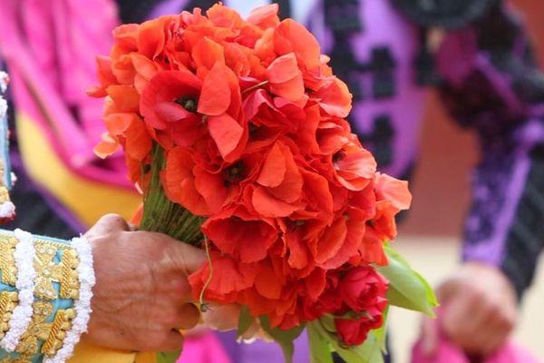 Premiers cartels, premières fleurs, coquelicots du toreo