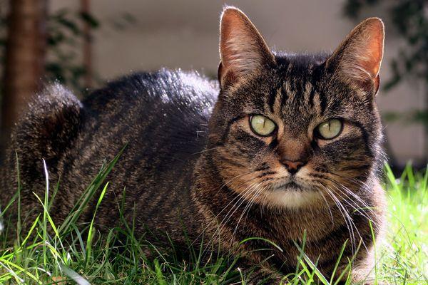Caen : le tortionnaire de chat jugé une nouvelle fois pour de nouveaux faits