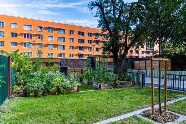 Cour d'école Bara-Cabanis végétalisée à Lille. Un îlot de fraîcheur.