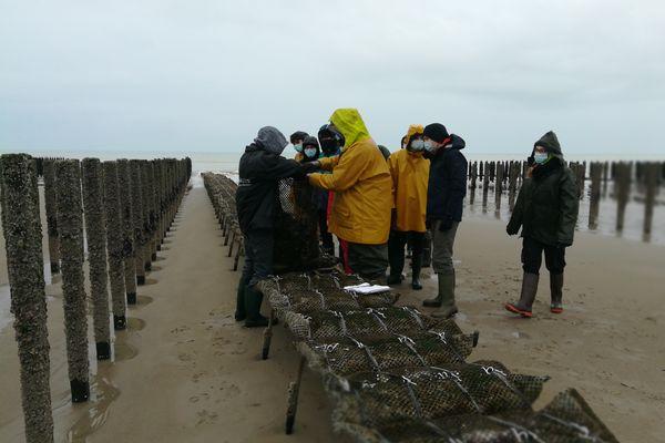 Les élèves prélèvent des huîtres dans les poches. Échantillons qui seront ensuite analysés dans le laboratoire du lycée
