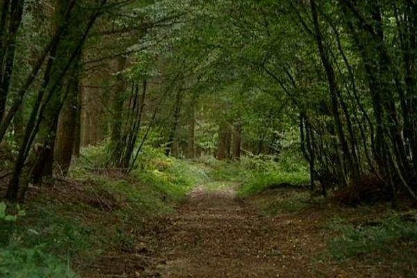 Des études se poursuivent sur la commune du Rousset, dans le canton de la Guiche, pour accueillir un éventuel Center Parcs.