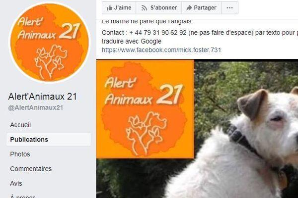 Le chien Billy est coincé sous le canal de Bourgogne depuis plusieurs jours. Les opérations de sauvetage ont déclenché une énorme polémique sur les réseaux sociaux.