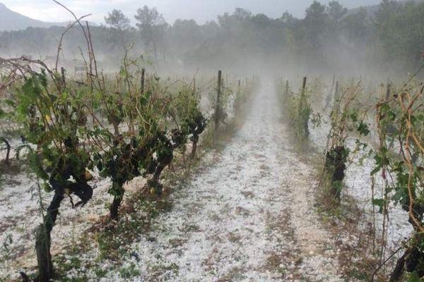 Le violent épisode de grêle du 17 août 2016 va toucher sur le long terme la production viticole de l'Hérault.