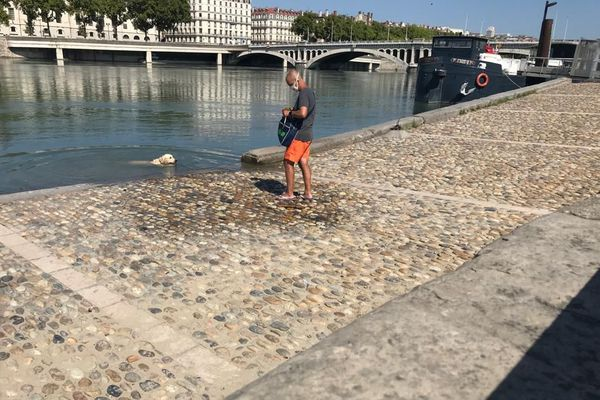 Pour éviter le coup de chaleur, Sparo réclame sa baignade du matin dans le Rhône. Lyon, 09/08/20.