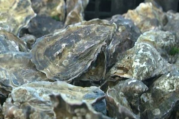 Des huîtres élevées en Irlande et commercialisées en Charente-Maritime