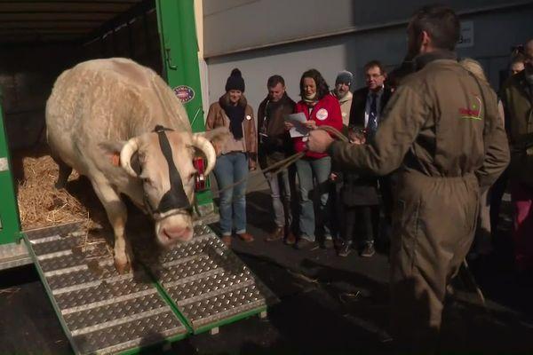 La vache Idéale, égérie du Salon de l'agriculture 2020, est arrivée vendredi 21 février à Paris.