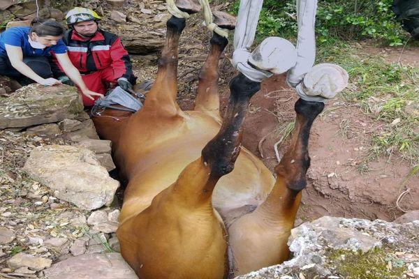 La Tour-sur-Orb (Hérault) - un cheval sauvé après être tombé dans un fossé et y être resté coincé. - 11 juin 2020.