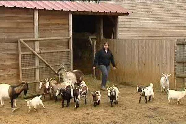 Elevage de chèvres de Magali Guillot à Jars (Cher). Chaque année, 25 000 visiteurs sont accueillis sur cette exploitation.