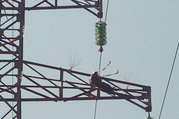 Villeveyrac - une cigogne électrocutée dans un câble à haute tension - août 2019