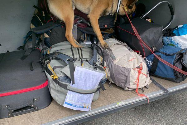 Plusieurs équipes cynophiles de la gendarmerie engagées dans cette vaste opération de lutte contre les stupéfiants dans la région.