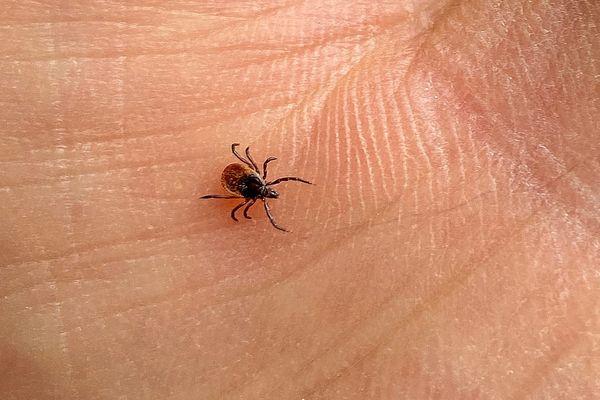 Les tiques sont nombreux dans les milieux naturels et sont susceptibles de transmettre des maladies dont la maladie de Lyme.