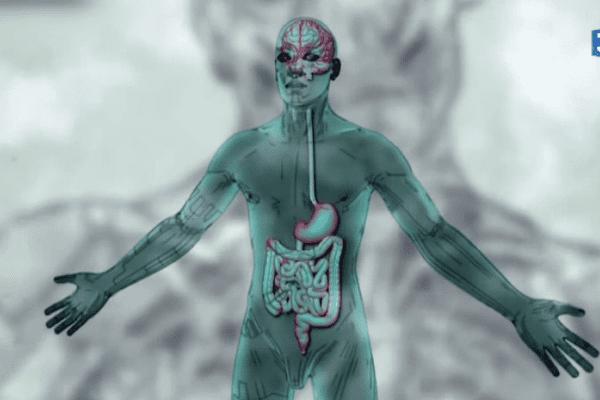 Notre ventre, ce second cerveau