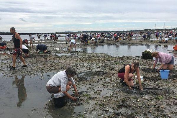Pêcheurs à pied au large de Mesquer (Loire-Atlantique) le dimanche 12 août 2018