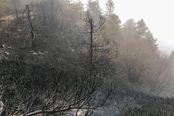 L'incendie a parcouru 116 hectares de végétation entre lundi et mardi sur le Mont Aigoual.