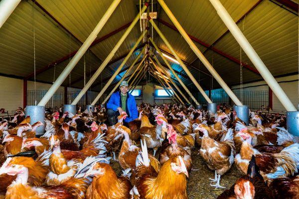 """Le Nord et le Pas-de-Calais sont en """"risque élevé"""", ce qui oblige à confiner les volailles"""