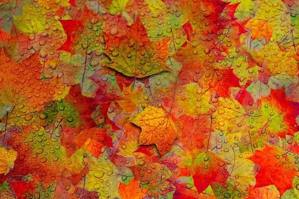 De belles couleurs d'automne sur une large partie de notre grande région