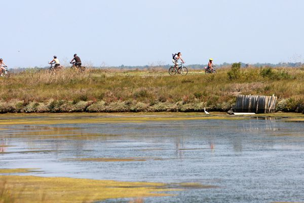 Sur les pistes cyclables de l'île de Ré.