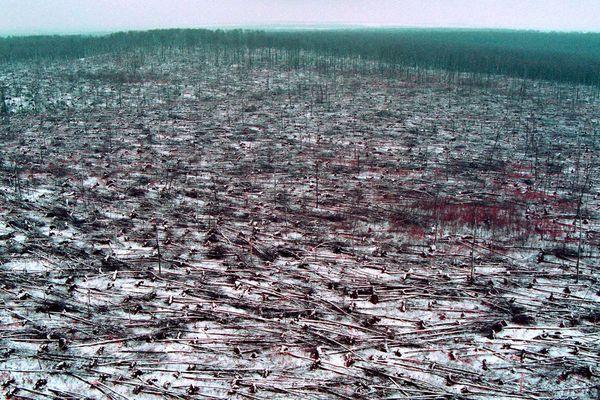 les arbres de la foret de haye